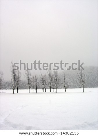 Snow covered trees in a midst of a blizzard, vertical - stock photo
