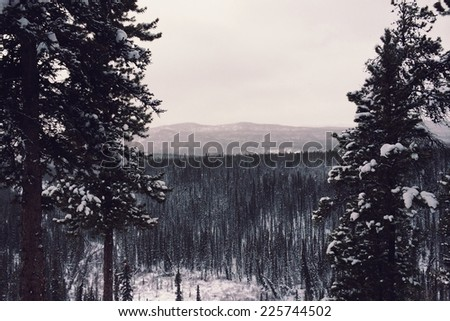 Snow-covered trees in a snow-covered valley near a mountain. - stock photo