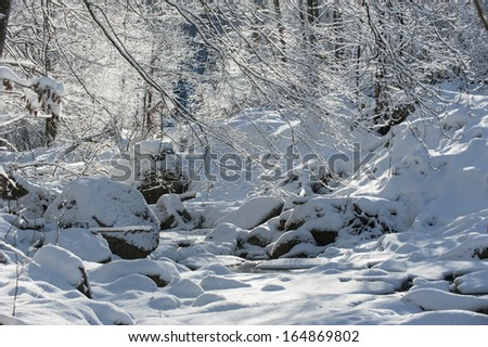 Snow covered trees in mountain forest - stock photo