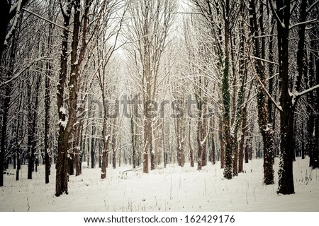 Snow covered trees in the forest in winter - stock photo