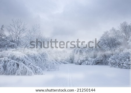 Snow covered trees in the forest, with ominous storm clouds above - stock photo