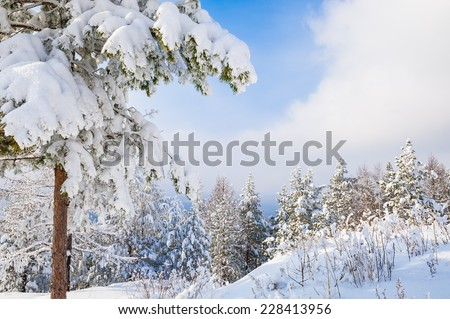 Snow covered trees in the mountains. Beautiful winter landscape - stock photo