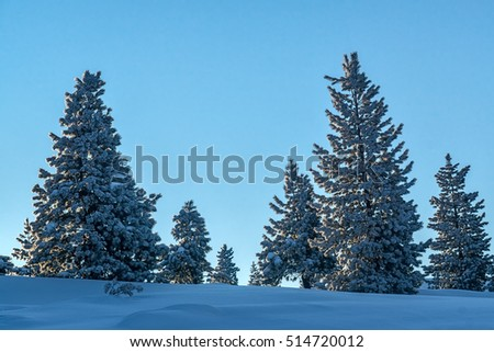 Snow-covered trees in the mountains of Khamar-Daban, Siberia