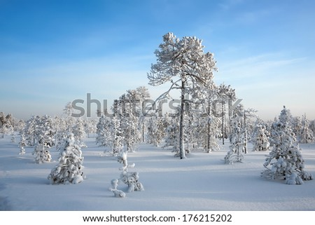 Snow-covered trees in the winter in solar weather, Siberia, Russia - stock photo