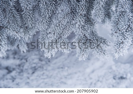 snow-covered trees in winter park - stock photo