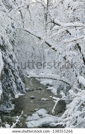 Snow covered trees over Goldbrook Stream in the middle of winter, Stowe, Vermont, USA - stock photo
