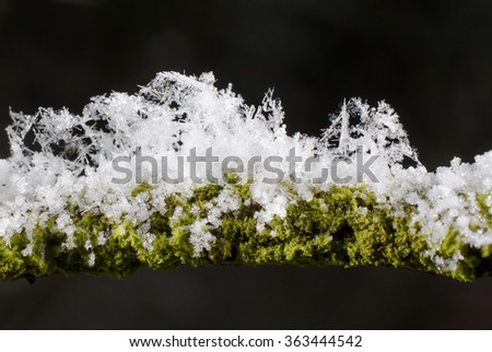 snow covered twig with lichen and moss - stock photo