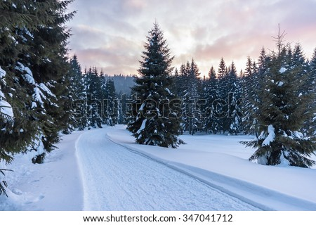 Snow-covered winter mountain road winding through pine-forest - stock photo
