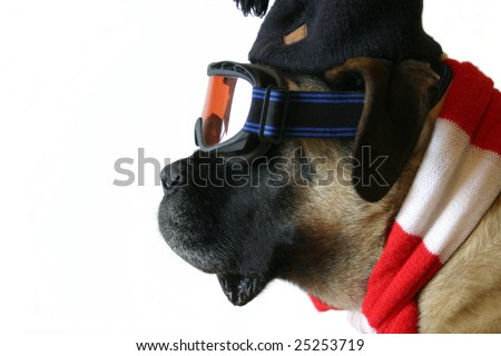 Snow Dog - stock photo