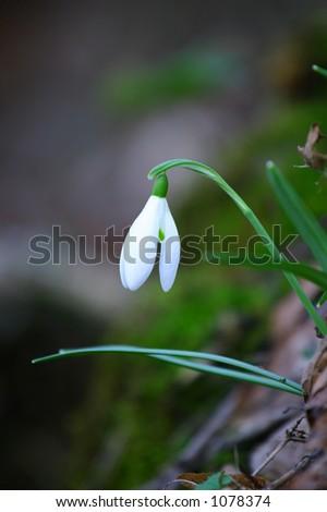 snow flower - stock photo