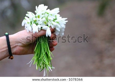 Snow flower hand - stock photo