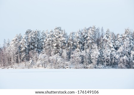 Snow frozen lake and forest in finland