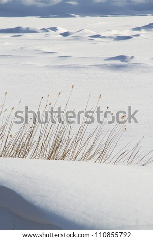 "Snow frozen lake and ""Karesusuki"" Withered pampas grass"