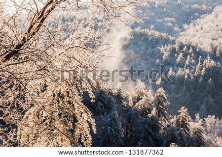 Snow, ice storm, in the North Georgia Mountains. - stock photo