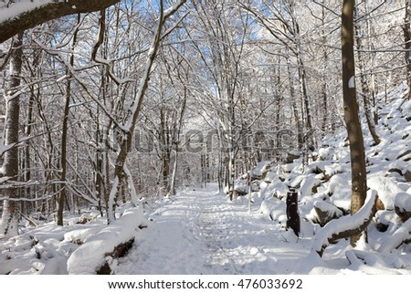 Snow in German forest