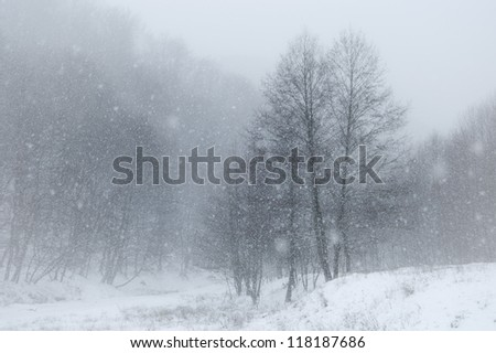 snow in landscape with trees - stock photo