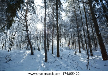Snow in the winter forest landscape.
