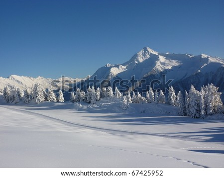 Snow landscape with forest - stock photo
