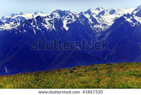 Snow Mountains Hurricane Ridge Olympic National Park Washington State Pacific Northwest Wildflowers Green Valleys Ridge Line - stock photo