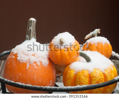 Snow on group of miniature pumpkins - stock photo