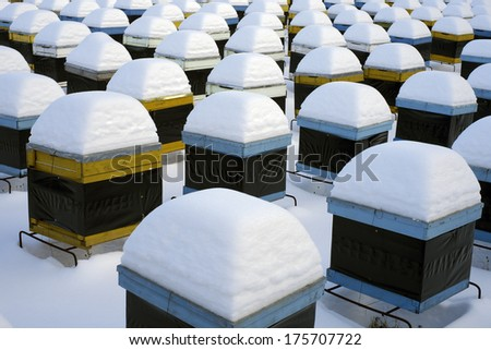 snow on hives