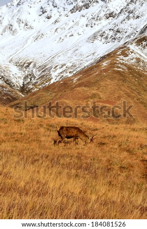 Snow on mountains, moorland, deer, stag - stock photo