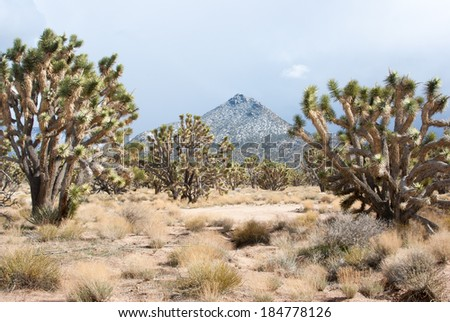 Snow on the mountains and Joshua trees of the Nevada desert - stock photo