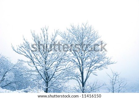 Snow on the trees in the blue light