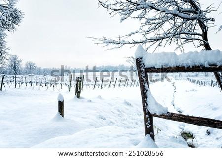 Snow on the vineyard in Italian winter - stock photo