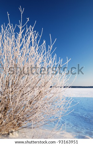snow on tree at the frozen lake shore at the sunrise