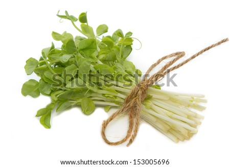 Snow Pea Sprouts  - stock photo