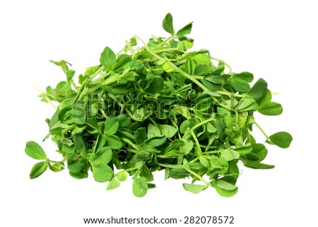 Snow Pea Sprouts on Isolated White Background - stock photo