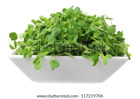 Snow Pea Sprouts on White Background - stock photo