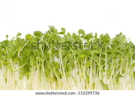 Snow Pea Sprouts ,vegetable background - stock photo