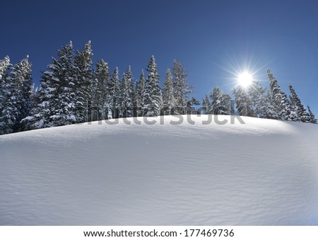 Snow Slope with Trees Line on Top. Scenic Winter Landscape. Sunny Clear Day. - stock photo