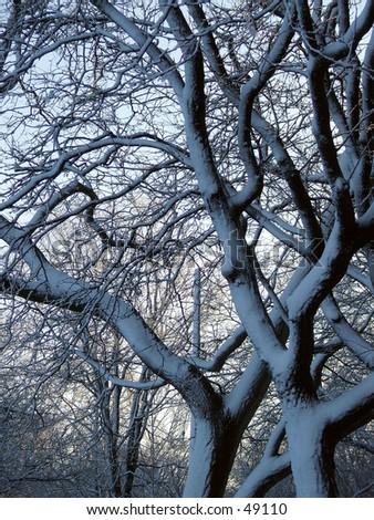 snow trees - stock photo