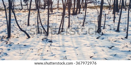 snow trees and sunlight background