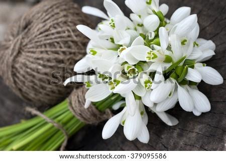 Snowdrop flowers - stock photo