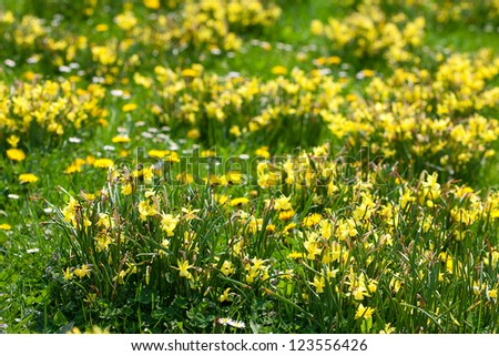 snowdrops and dandelions on the background of green grass - stock photo