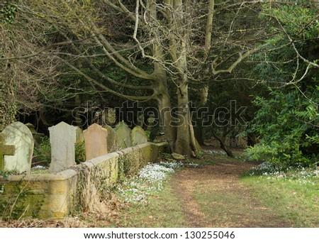 Snowdrops By A Path Beside A Woodland Cemetery - stock photo