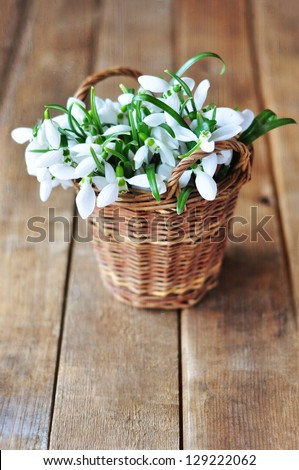 Snowdrops in a basket - stock photo