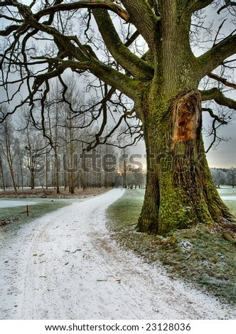 Snowed road under and old oak tree - stock photo