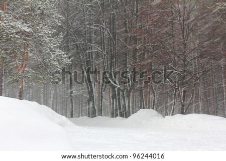 snowfall and blizzard in winter forest - stock photo