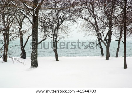 snowfall in the sea coastal forest - stock photo