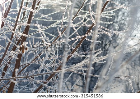 Snowfall on a sunny winter day, selective focus. Thin tree branches covered with snow.  - stock photo