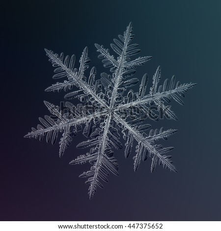 Snowflake on dark gradient background: macro photo of real snow crystal on sheet of glass with LED back lighting. This is very big fernlike dendrite snowflake, around 7 millimeters from tip to tip. - stock photo