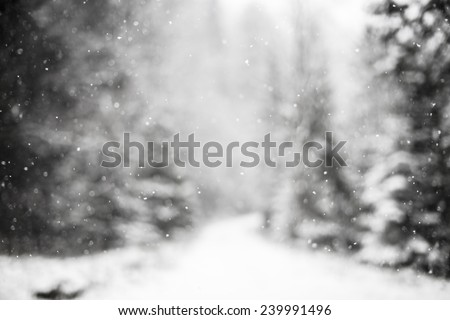 Snowing snowflakes against winter forest. - stock photo