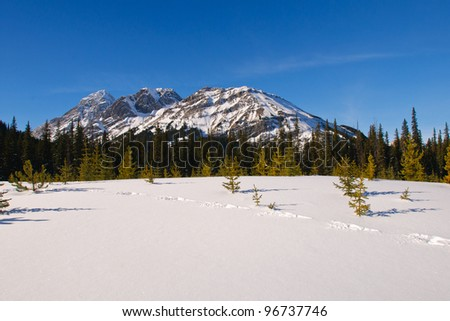 Snowshoe Hare tracks through fresh snow in the mountains, Alberta Canada - stock photo