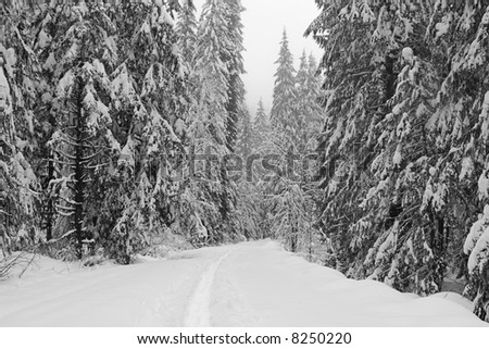 Snowshoe path through winter wilderness area in Washington State, USA - stock photo
