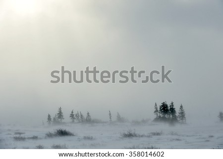Snowstorm in tundra landscape with trees. low visibility conditions due to a snow storm in tundra foreground in Canada at winter time - stock photo